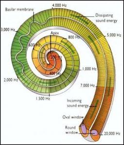 fibonacci_ear_plan